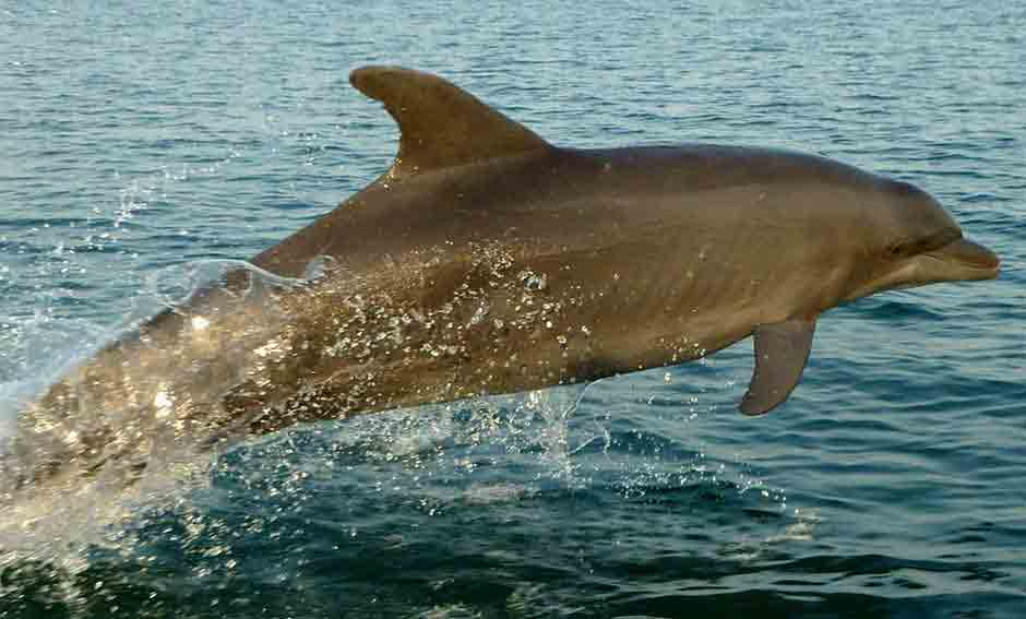 dolphin photo bijagos archipelago in guinea bissau