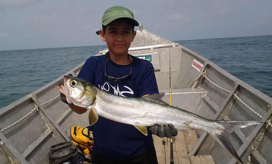 magnificent elops or ladyfish caught at kere