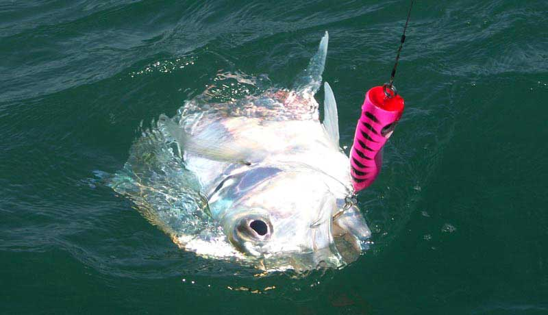 Pompano trevally catch with popper in bijagos